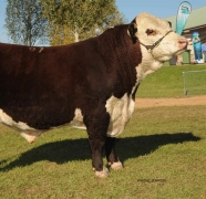 2013-Wodonga-Show-and-Sale